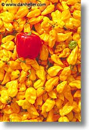 africa, burkina faso, peppers, vertical, photograph