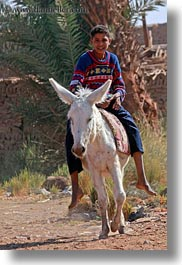 africa, al kab, boys, donkeys, egypt, vertical, villages, photograph