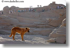africa, aswan, dogs, egypt, granite, horizontal, quarry, photograph