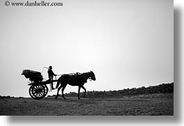africa, black and white, boys, cairo, carriage, egypt, horizontal, horses, photograph