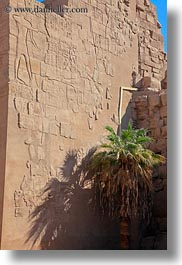 africa, bas reliefs, egypt, karnak temple, luxor, palm trees, vertical, walls, photograph