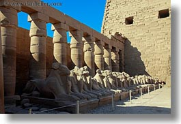 africa, egypt, horizontal, karnak temple, luxor, rams, rows, photograph