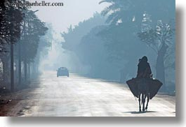 africa, egypt, foggy, horizontal, luxor, mules, roads, scenics, walking, photograph