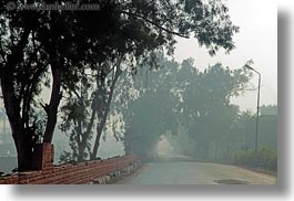 africa, egypt, foggy, horizontal, luxor, roads, scenics, trees, photograph