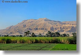 africa, egypt, farm, horizontal, luxor, mountains, scenics, photograph