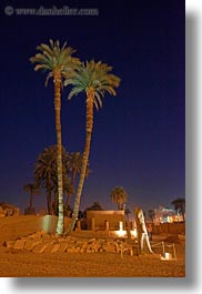 africa, egypt, luxor, nite, palm trees, scenics, vertical, photograph