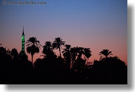africa, dusk, egypt, horizontal, mosques, palm trees, photograph