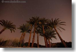 africa, egypt, horizontal, long exposure, nite, palm trees, stars, photograph