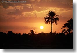 africa, egypt, horizontal, palm trees, sunsets, photograph