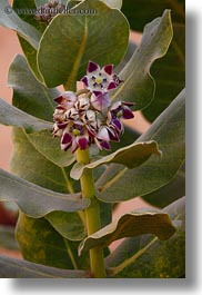 africa, cactus, egypt, flowers, nubian village, vertical, photograph