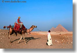 africa, camels, egypt, horizontal, vicky, victoria gurthrie, wt people, photograph
