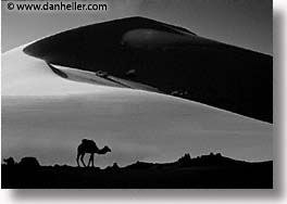 africa, black and white, camels, desert, dunes, horizontal, morocco, sahara, sand, silhouettes, photograph