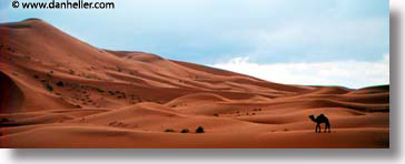 africa, black and white, camels, desert, dunes, horizontal, morocco, panoramic, sahara, sand, photograph