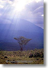 africa, arusha, clouds, sun, tanzania, trees, vertical, photograph