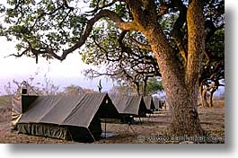 africa, animals, horizontal, tanzania, tarangire, tents, wild, photograph