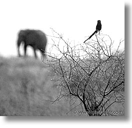 africa, black and white, square format, tanzania, photograph