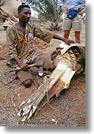 africa, chopping, togo, tribes, vertical, west africa, photograph