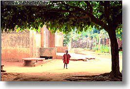 africa, frames, horizontal, togo, trees, tribes, west africa, photograph