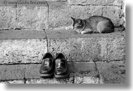 animals, asia, bhutan, black and white, cats, horizontal, shoes, sleeping, photograph