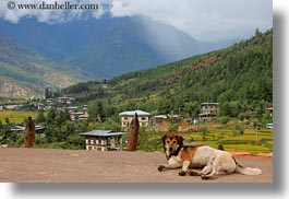 animals, asia, bhutan, dogs, horizontal, landscapes, photograph