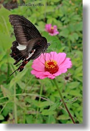 asia, bhutan, butterflies, colors, flowers, lush, nature, pink, vertical, photograph