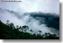 asia, bhutan, fog, fog clouds, horizontal, landscapes, trees, photograph