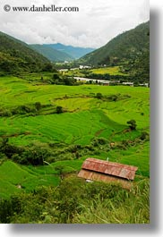 asia, bhutan, colors, fields, green, houses, landscapes, lush, nature, rice, rice fields, terraced, vertical, photograph
