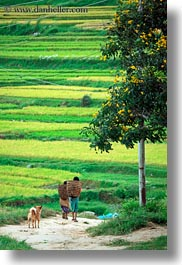 asia, bhutan, colors, fields, green, landscapes, lush, nature, people, rice, rice fields, roads, vertical, walking, photograph
