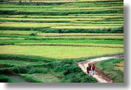asia, bhutan, colors, fields, green, horizontal, landscapes, lush, nature, people, rice, rice fields, roads, walking, photograph