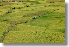 asia, bhutan, colors, fields, green, horizontal, landscapes, lush, nature, rice, rice fields, valley, photograph