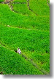 asia, bhutan, colors, fields, green, landscapes, lush, nature, rice, rice fields, vertical, workers, photograph