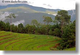 asia, bhutan, colors, fields, green, horizontal, landscapes, lush, nature, rice, rice fields, workers, photograph