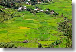 asia, bhutan, colors, fields, green, horizontal, houses, landscapes, lush, nature, rice, rice fields, photograph