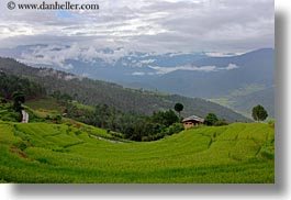 asia, bhutan, colors, fields, green, horizontal, landscapes, lush, mountains, nature, rice, rice fields, photograph