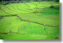 asia, bhutan, blues, colors, fields, flags, green, horizontal, landscapes, lush, nature, rice, rice fields, photograph