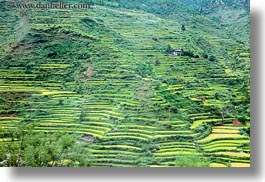 asia, bhutan, colors, fields, green, horizontal, landscapes, lush, nature, rice, rice fields, terraced, photograph