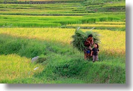 asia, bhutan, carrying, colors, green, horizontal, landscapes, lush, nature, rice, rice fields, womens, photograph