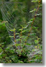 asia, bhutan, spider, vertical, web, photograph