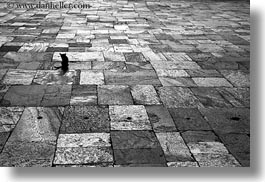 asia, bhutan, black and white, cats, horizontal, punakha dzong, stones, tiles, photograph