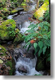 asia, bhutan, leaves, lush, nature, vertical, water, waterfalls, photograph