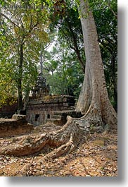 angkor thom, asia, big, cambodia, palace gate, roots, trees, vertical, photograph