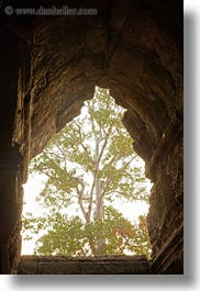 angkor wat, asia, cambodia, east entrance, holes, trees, vertical, photograph