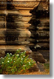 angkor wat, architectural ruins, asia, cambodia, flowers, plants, vertical, photograph