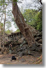 asia, beng mealea, cambodia, growing, trees, vertical, walls, photograph