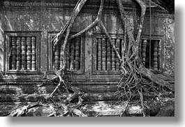 asia, beng mealea, cambodia, growing, horizontal, trees, windows, photograph