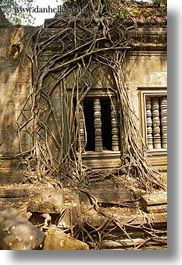 asia, beng mealea, cambodia, growing, trees, vertical, windows, photograph