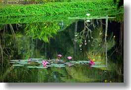 asia, cambodia, flowers, horizontal, hotels, pond, photograph