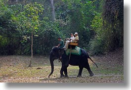 asia, cambodia, elephant ride, elephants, horizontal, people, riding, tourists, photograph