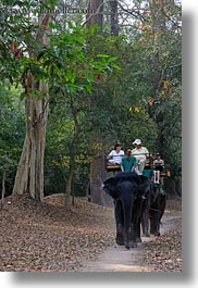 asia, cambodia, elephant ride, elephants, people, riding, tourists, vertical, photograph