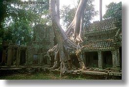 asia, cambodia, growing, horizontal, preah khan, trees, walls, photograph
